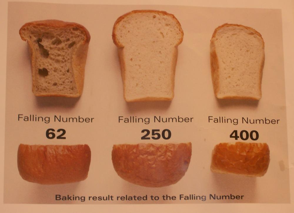 Alfa amilasi. Una storia di farina, lieviti, enzimi e indici di qualità delle farine (2/2)